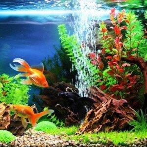 Как сделать самому декор аквариума